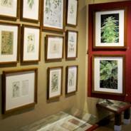 Leer alles over hennep in het Hash, Marihuana & Hemp Museum